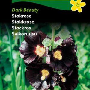 Stokrosefrø, Dark Beauty